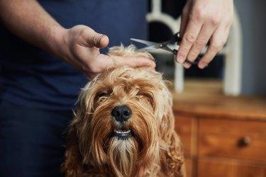 Man giving his pet dog a haircut