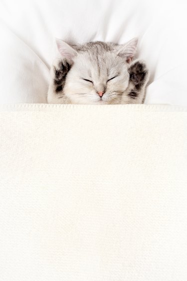 A white kitten sleeps cutely under a white blanket, paws up