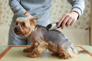 dog grooming close up.