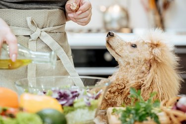 Pouring olive oil on freshly made salad while a dog looks on