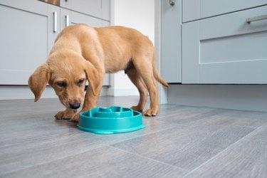 slow feeder dog bowl puppy