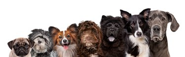 seven different dog breed portraits