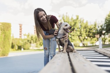 Beauty woman young training her dog in park attractions