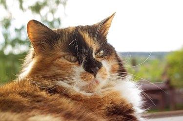 Portrait of ginger cat in sunlight closeup