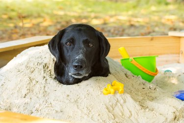 Dog Buried In Sandpit