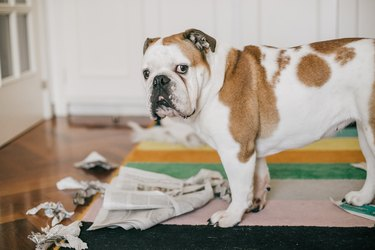 dog bite some newspaper while alone at home