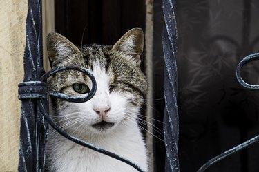 one-eyed blind cat