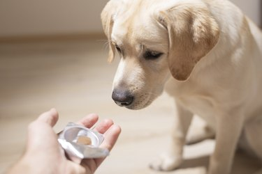 man offering tablet to dog. Pet health care, veterinary drugs and treatments concept.