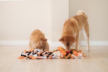 Competition Between A Cat And A Dog. Finding Treats In Homemade Educational Snuffle Mats For Pets.