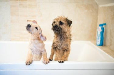 two dogs in the bath tub