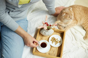 Woman sitting on the bed, and drink coffee, cat feeding during the morning sunlight,
