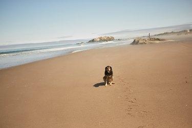 Dog on a Beach sitting