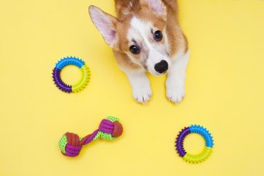 Concept pet care, playing and training