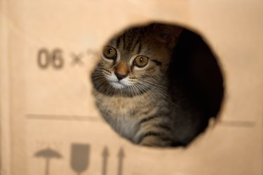 The kitten looks out of the hole in the box.