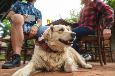 Cute dog sitting with his owner in a local beer brewery