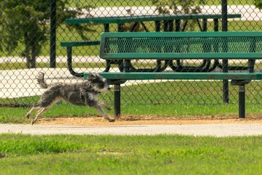 Mid-air small dog running past a park bench