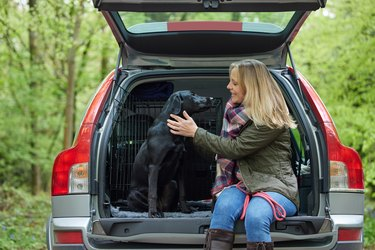 Mature Woman Sitting With Black Labrador In Back Of Car Before Going On Walk In Countryside