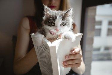 tiny kitten inside of a book