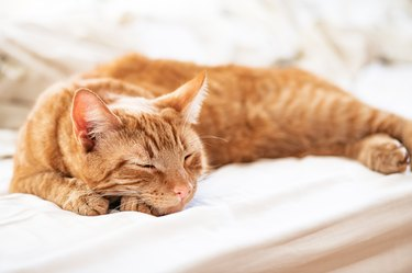 Cute ginger cat sleeps on the bed
