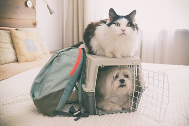 Small dog in carrier with cat sitting on top