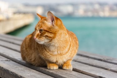 A red cat sits on the background of the sea and looks away