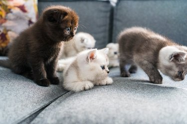 5 kittens on a couch