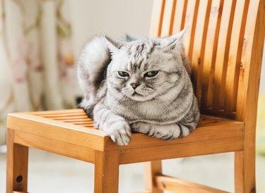 cat giving you a disdainful look