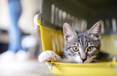 kitten in a Pet Travel Carrier