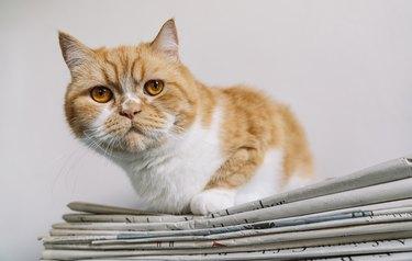 grumpy cat sits on a newspaper stack
