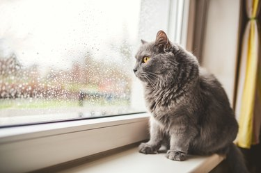 Cat looking out on a rainy day
