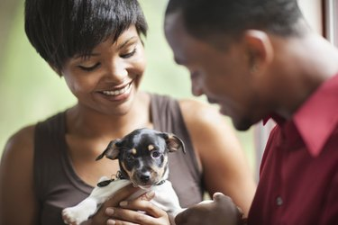 African American couple looking at puppy