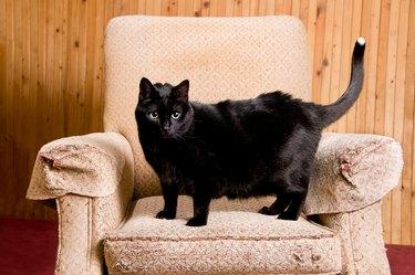 Black Cat Scratching Post