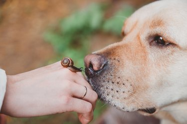 Dog sniffing a snail on someone's hand