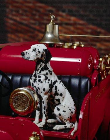 Dalmation on fire engine