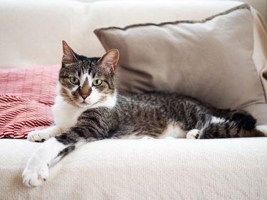 Cat lying on a sofa