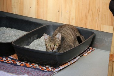 Closeup shot of a cat hiding in the litter box indoor