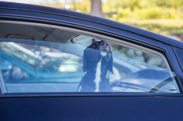 dog pokes its muzzle out of the car window