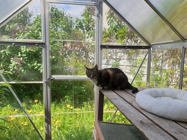 Domestic cat in its private outdoor enclosure