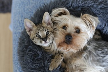 Dog and cat with together in bed