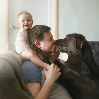 Young handsome father with cute smiling little infant sitting on his shoulders and pet labrador retriever