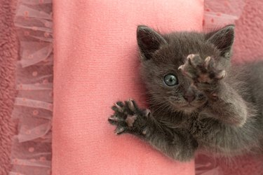 Gray kitten with claws on a pink pillow