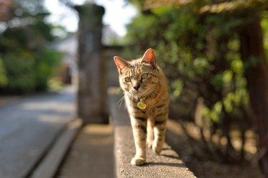 Brown Cat Walking On Wall