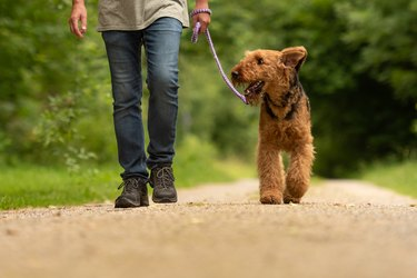 airedale terrier and man walking on hiking trail
