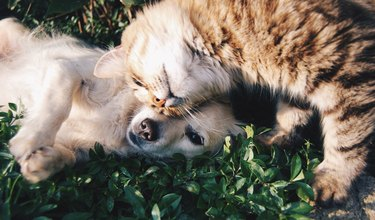 Close-up of cat and puppy cuddling together in grass