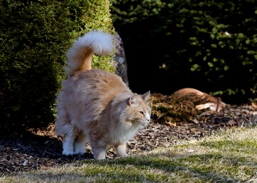 A tom cat in garden on a sunny day