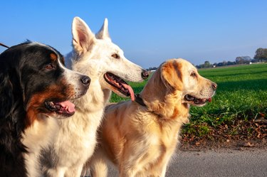 Three dogs standing together