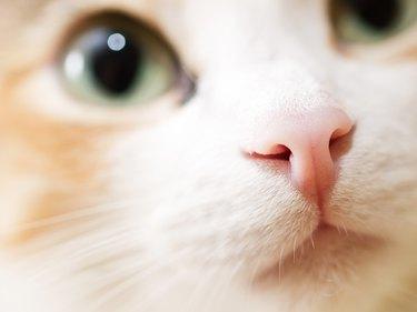 Close-up photo of cat nose. Cute domestic cat
