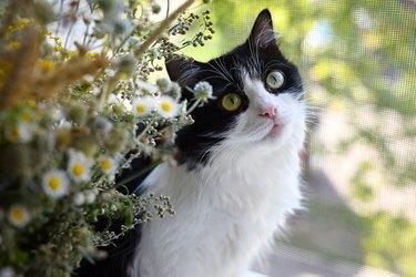 Cat on the windowsill.