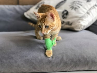 CUTE INJURED KITTEN WITH BANDAGE ON