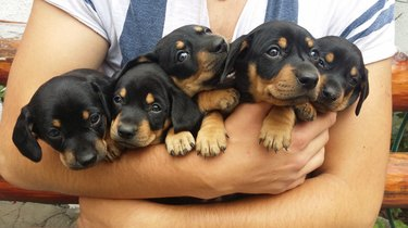 Man carrying 5 puppies in arms